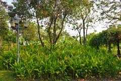 L'espace vert de jardin Photographie stock libre de droits