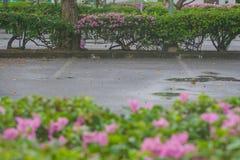 L'espace vide dans le parking de voiture aux bâtiments extérieurs avec le fond vert de buisson Photographie stock