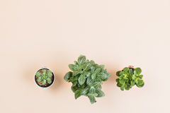 L'espace vide de copie de configuration plate pour le travail de conception avec le petit cactus photographie stock