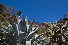 l'espagne Il présente différentes espèces de cactus, de plantes tropicales et de jardin Images libres de droits