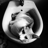 L'Espagne - Séville - chat domestique image libre de droits