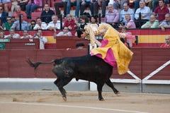 L'Espagnol Curro Diaz de toréador attrapé par le taureau Photos libres de droits