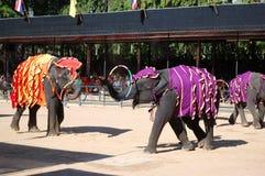 L'esposizione famosa dell'elefante in Nong Nooch Fotografie Stock Libere da Diritti