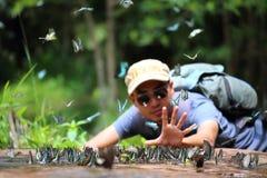L'essaim de papillons mange des minerais Photographie stock libre de droits