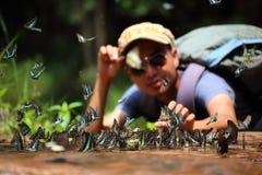 L'essaim de papillons mange des minerais Images stock