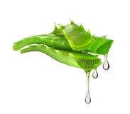 L'essenza dalla pianta di vera dell'aloe gocciola dalle foglie Fotografia Stock