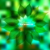 L'estate copre di foglie struttura su fondo confuso Fotografie Stock