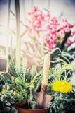 L'estate fiorisce la pianta per il giardino con gli strumenti di giardinaggio, felce e fiorisce la piantina con la pala Fotografie Stock Libere da Diritti