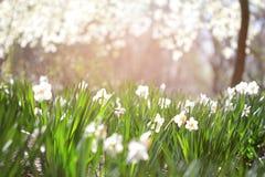L'estate fiorisce la priorità bassa Fotografie Stock
