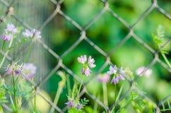 L'estate fruttifica foglie Immagini Stock Libere da Diritti