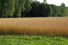 L'Estonie, Estonie Puhtitsa image stock