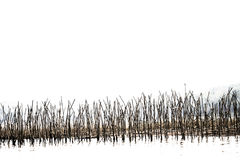 L'estratto del ramo di albero dello straigth in acqua del lago fotografia stock