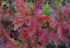 L'estratto giallo luminoso di colore dell'edera di bellezza del coleus naturale delle rose di rovo di autunno fiorisce l'autunno  Fotografia Stock Libera da Diritti