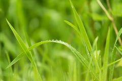 L'estratto offusca il fondo di erba verde con le gocce di acqua fotografie stock libere da diritti