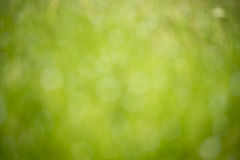 L'estratto offusca il fondo verde naturale immagini stock