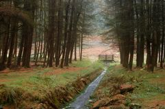 L'estremità della foresta Fotografia Stock