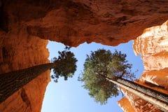 L'estremità di Wall Street, canyon di Bryce Fotografia Stock
