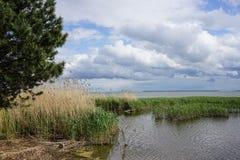 L'estuario allo sputo di Curonian nella regione di Kaliningrad Immagine Stock