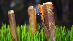 L'euro argent s'élevant, fourmis fonctionnent dans le mouvement lent banque de vidéos