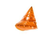 L'Européen slu d'escargot de mer a peint de Topshell - de Calliostoma zizyphinum photographie stock libre de droits