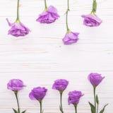 L'eustoma violet coloré fleurit sur le fond et l'espace libre en bois blancs pour le texte au dessus Photographie stock libre de droits