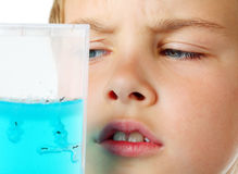 L'examen minutieux de garçon regarde dans l'aquarium d'hélium - ferme de fourmi Images stock