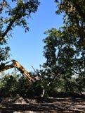 L'excavatrice utilisée pour creuser des arbre-tronçons et des racines après la forêt a été enlevée photos libres de droits