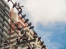 L'expansion rapide des oiseaux de grandes villes et les animaux sont sur le pavé images libres de droits