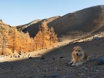 L'explorateur de chien sur les personnes menées de terrain montagneux à l'endroit et fixent pour se reposer à la nuance photo libre de droits