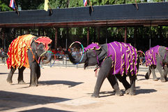 L'exposition célèbre d'éléphant dans Nong Nooch Photos libres de droits