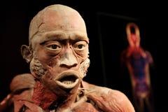L'exposition de corps humain à Cracovie, Pologne Photo libre de droits