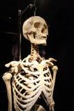 L'exposition de corps humain à Cracovie, Pologne Image stock