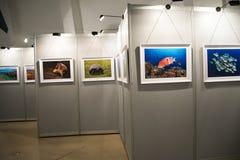 L'exposition de photo, le hall d'exposition Photos stock