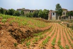 L'extérieur végétal de champ de Hillside a clôturé des villas en été ensoleillé images libres de droits