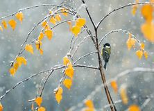 L fågelsammanträde i den sena hösten i parkera på en filial av ett b Arkivfoton