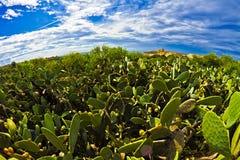 L-Foresti Kaktus tal (el bosque del cactus) Fotografía de archivo