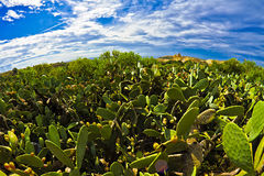 L-Foresti Kaktus tal (la foresta del cactus) Fotografia Stock