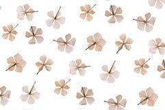 L?genheten tryckte p? den torkade blomman som isolerades p? vit royaltyfri fotografi