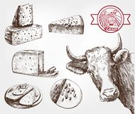 Lęgowe krowy Fotografia Stock