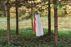 L'habillement des femmes sur un cintre dans la forêt sur un arbre sur une branche Photos libres de droits
