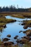 L'habitat d'orignaux : marais dans la forêt boréale du Québec Images libres de droits