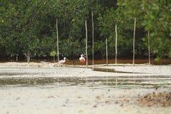 L'habitat de rivière chez Celestun, Mexique image stock
