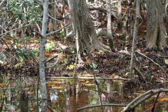 L'habitat de rivière chez Celestun, Mexique photographie stock