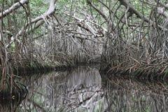 L'habitat de rivière chez Celestun, Mexique photographie stock libre de droits