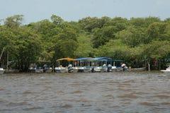 L'habitat de rivière chez Celestun, Mexique photo stock
