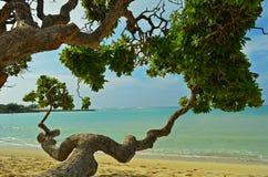 L'Hawai, grande isola Fotografie Stock