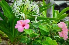 L'Hawai, grande isola Fotografie Stock Libere da Diritti