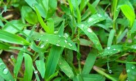 L'herbe Image libre de droits