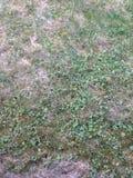 L'herbe Photos stock