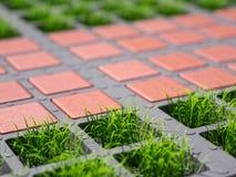 L'herbe a apprêté l'illustration 3d en gros plan de stationnement Photo stock